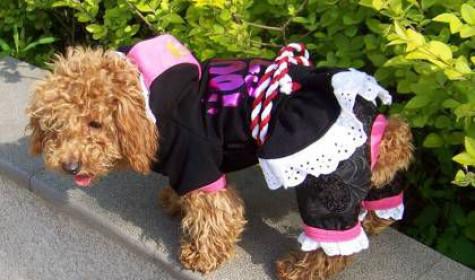 Продавать одежду для собак просто и выгодно