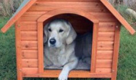 Строим будку для собаки